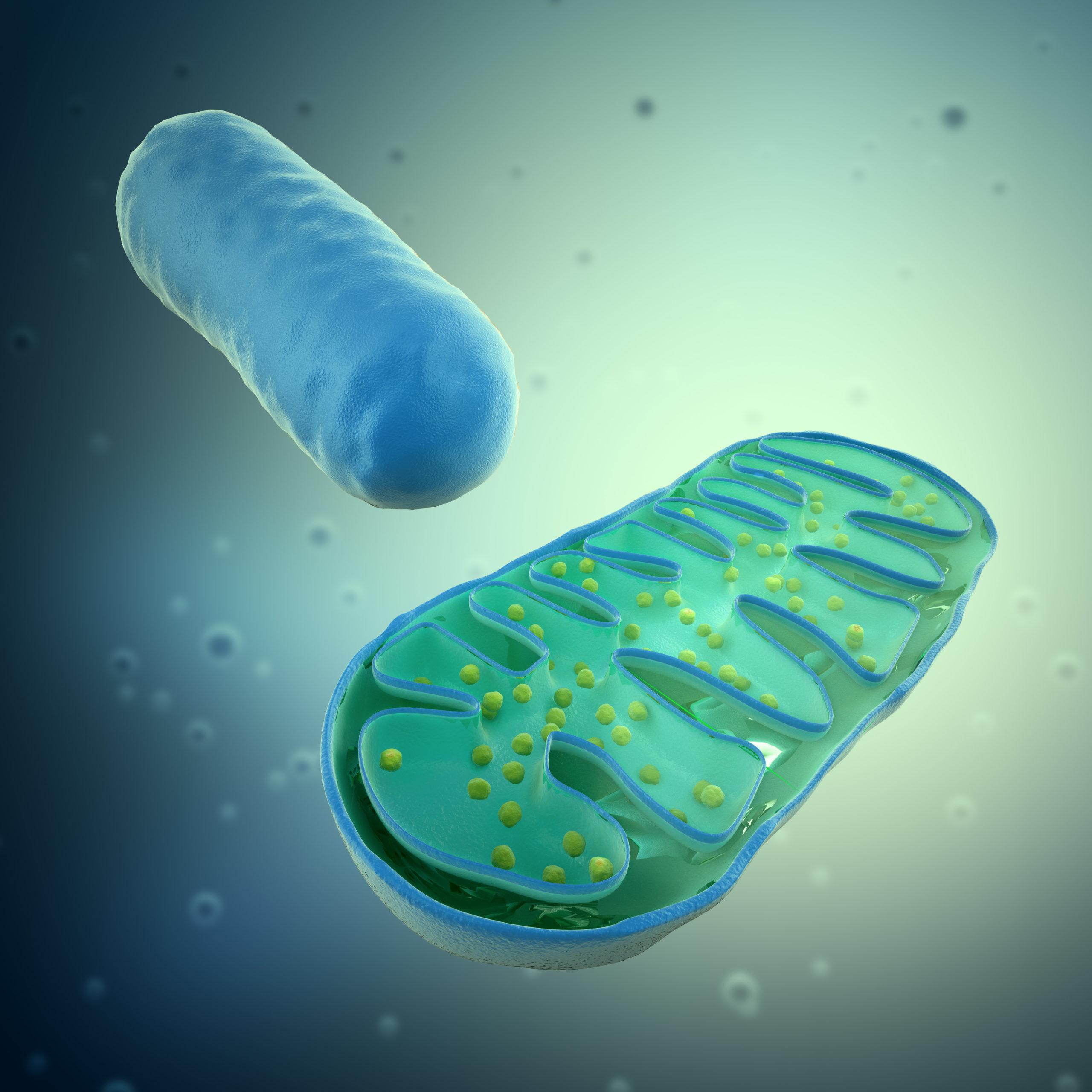Mitochondria terapia ihht